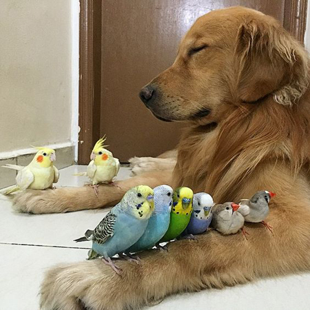 Quanto costa in confronto ad altri animali domestici?